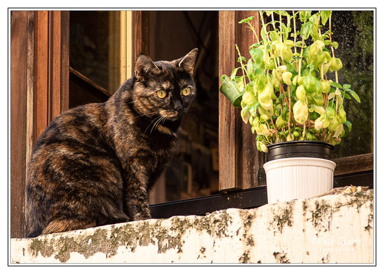<b>Fensterkatze</b><br>    ©Reiner Gruhle
