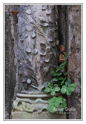 <b>Säulenranken</b><br>    ©Reiner Gruhle