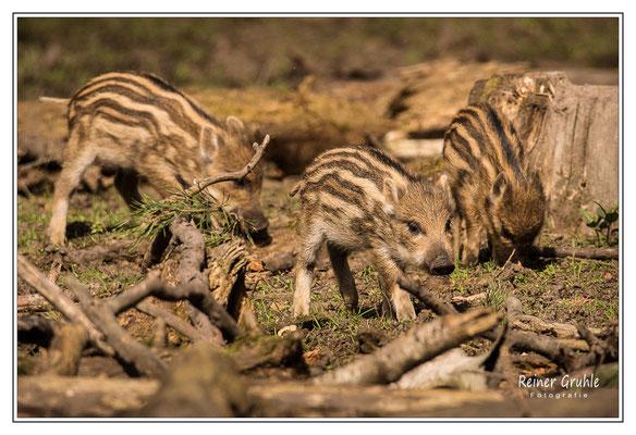<b>3fach frisch</b><br>Tierpark Alte Fasanerie, Klein-Auheim    ©Reiner Gruhle