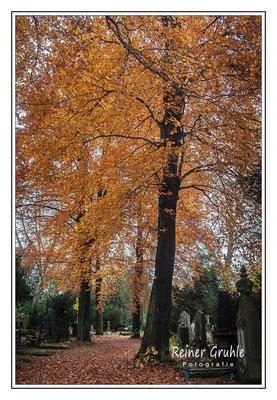 <b>Herbststimmung auf dem Friedhofsweg</b><br>    ©Reiner Gruhle