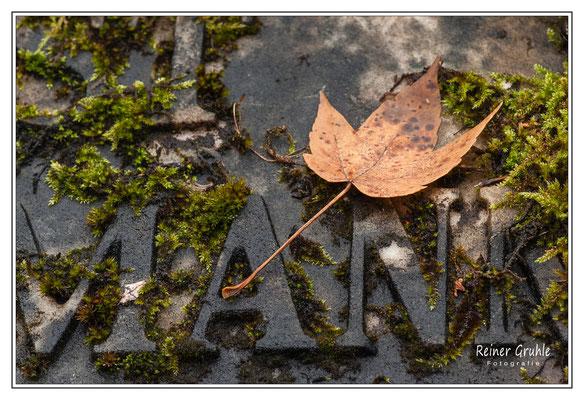 <b>MANN</b><br> Alter Jüdischer Friedhof Frankfurt   ©Reiner Gruhle