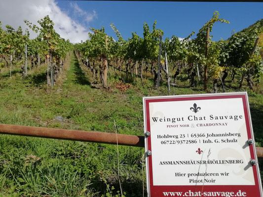 le célèbre vignoble du Chat Sauvage qui appartient au château Johannisberg