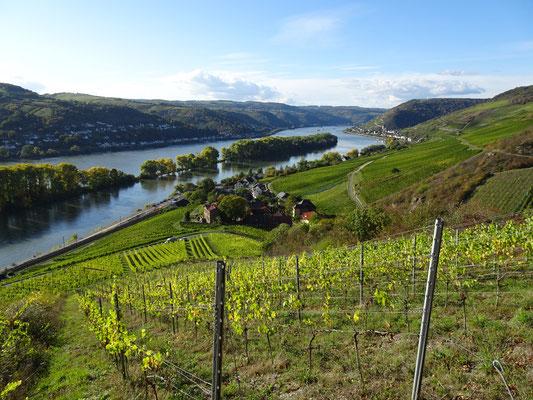 Balade entre Rhin et vignes
