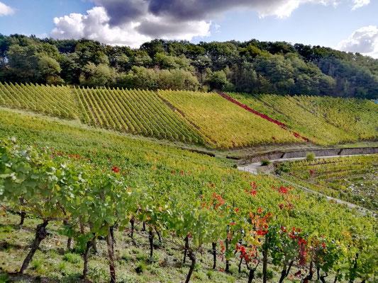 les vignes se parent de couleurs