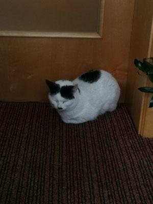 "Haus Katze ""Moritz"" vom Haus Albitt"