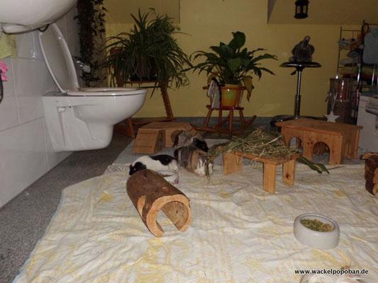 Unser Bad, ausgestattet mit Papphäusern und großzügigen Holzhäusern, Wasser und genügend Futterplätzen