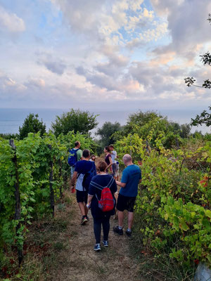 vineyard tour Ca' di Mare