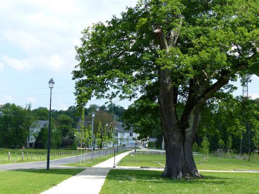 Le chêne Saint-Louis