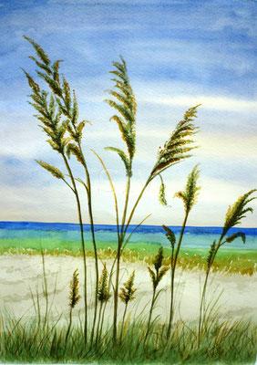 Gräser am Meer