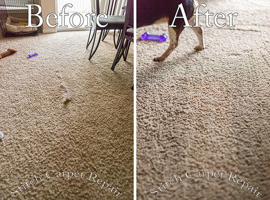 Carpet patch dog pet damage in living room Austin Round Rock Cedar Park Manor Bee Cave San Marcos