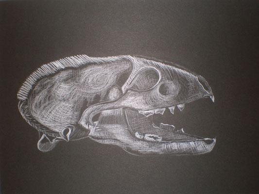 Schädel und dessen Wahrnehmung - Weisser Bleistift