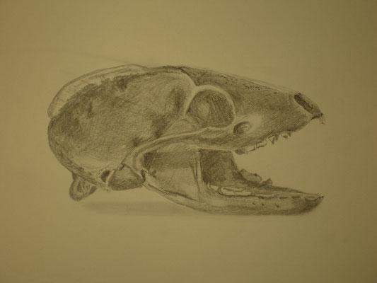 Schädel und dessen Wahrnehmung - Bleistift