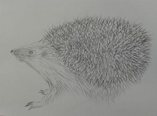 Bleistipft - Thema Tier