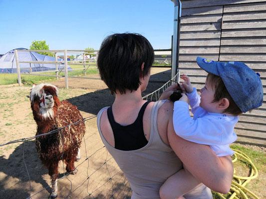 Lama schaut was Nico mit Mamis Sonnenbrille macht!