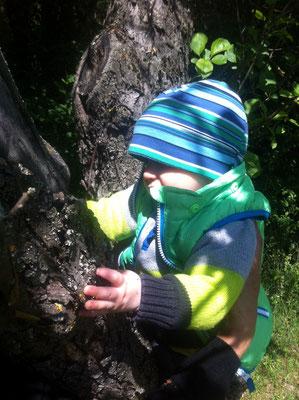 Baumforscher Noah
