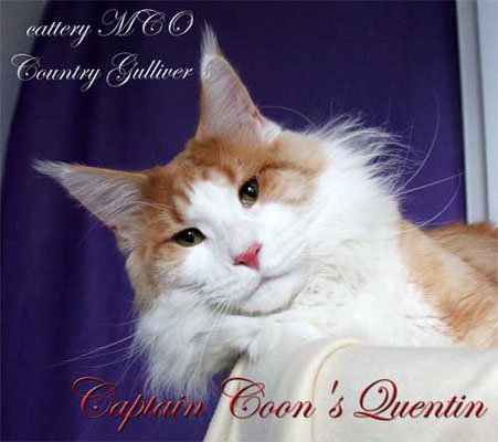 Captain Coon's Quentin