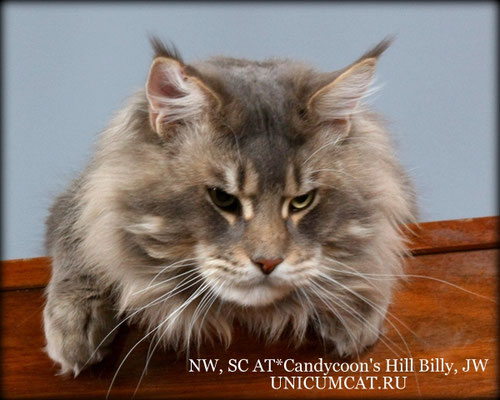 SC AT*Candycoon's HillBilly JW 1 year 9 months
