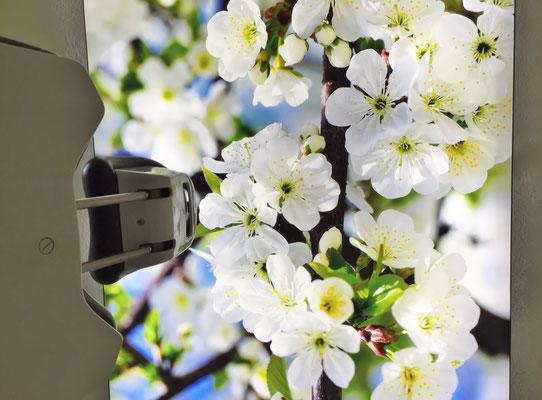 Ein helles freundliches Frühjahrsmotiv als beleuchtetes Bild an der Decke.