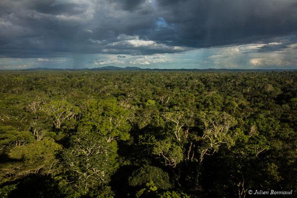 Canopée de la forêt guyanaise le 05/07/2017 (prise de vue depuis un hélicoptère)