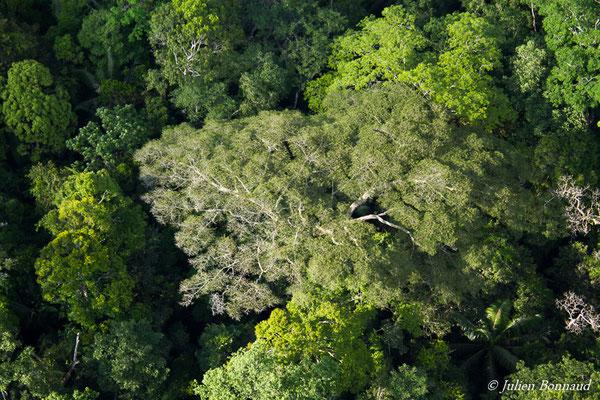 Cime d'un arbre (prise de vue depuis un hélicoptère)