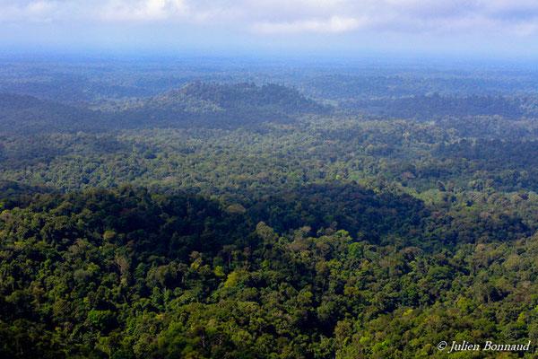 Canopée de la forêt guyanaise (prise de vue depuis un hélicoptère)