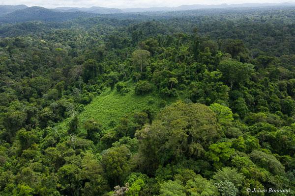 Patchs de cambrouzes d'origine naturelle au coeur de la forêt, le 12/04/2017 (prise de vue depuis un hélicoptère)