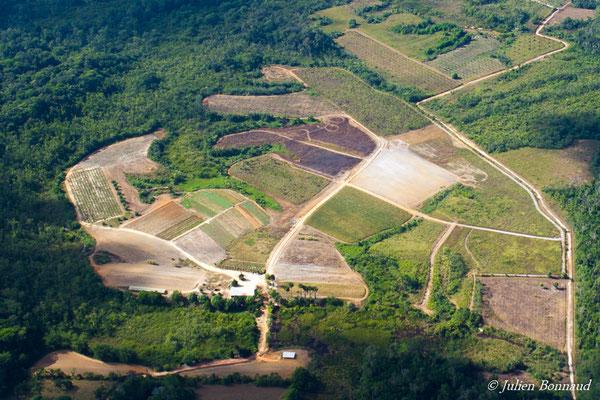 Exploitation maraîchère au ceur de la forêt (prise de vue depuis un hélicoptère)