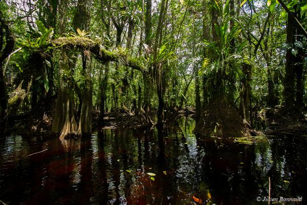 Forêt marécageuse avant le Lac Pali (Kaw-Roura, le 05/08/2017)