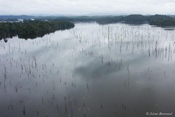 Forêt submergée par le barrage de Petit-Saut, le 12/04/2017 (prise de vue depuis un hélicoptère)