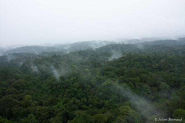 Canopée de la forêt guyanaise après une averse, le 12/04/2017 (prise de vue depuis un hélicoptère)