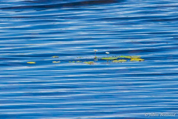 Lac Orchidée (Centre Spatial Guyanais, Kourou, le 21/02/2017)