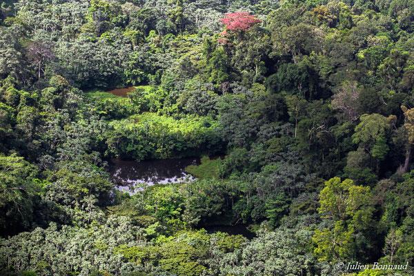 Anciennes barranques d'orpaillage recolonisées par la végétation (prise de vue depuis un hélicoptère)