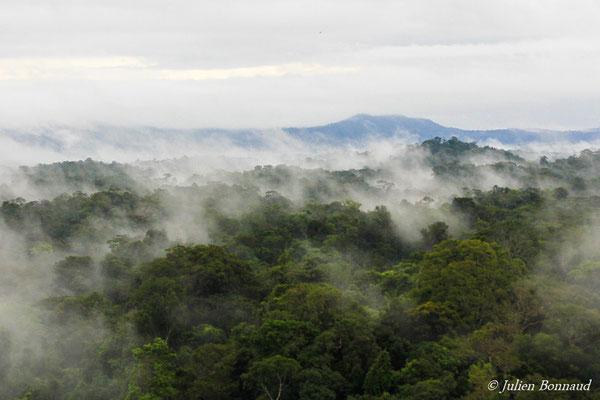 Canopée de la forêt guyanaise sous la brume (prise de vue depuis un hélicoptère)