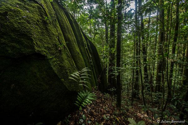 Bloc granitique au coeur de la forêt, Régina, le 15/07/2017