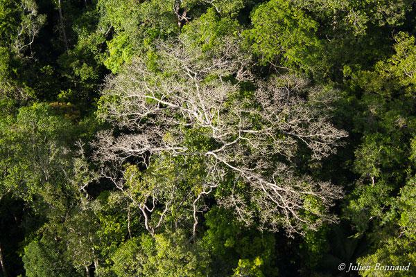 Arbre ayant perdu ses feuilles (prise de vue depuis un hélicoptère)