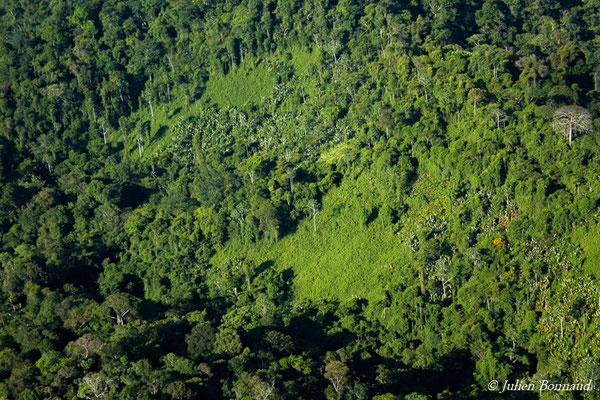 Patchs de cambrouzes d'origine naturelle au coeur de la forêt (prise de vue depuis un hélicoptère)