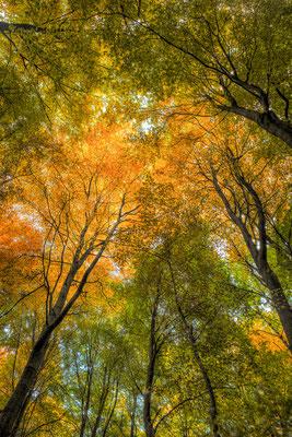 31 Herbst im Kleckerwald - Foto: Holger Tobuschat