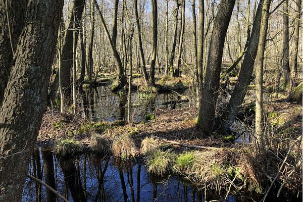 Moor, Moorgürtel - Foto: Gerd Jürgen Hanebeck