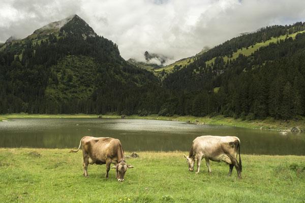 Schweiz - Foto: Dagmar Esfandiari
