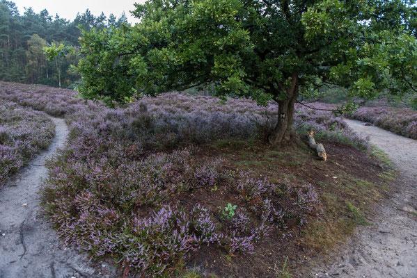 Fischbeker Heide - Foto: Gesche Andresen