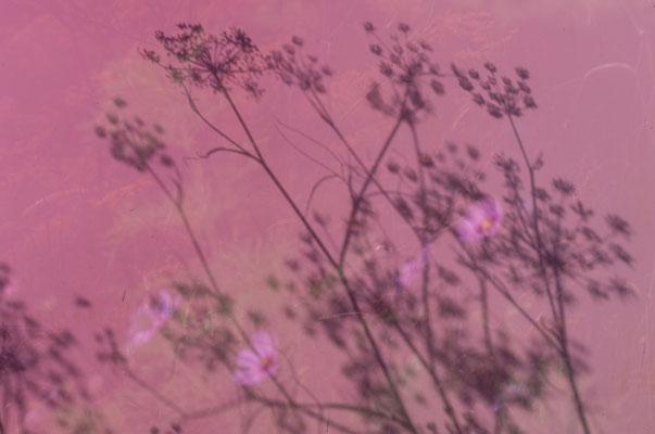 Schatten - Foto: Britta Hamann