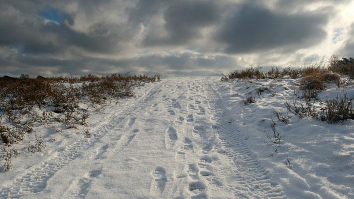 So viel Schnee in der FischbekerHeide - Foto: Romana Thurz
