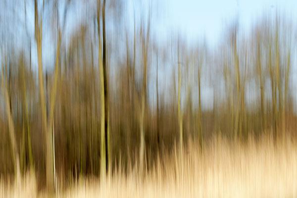 Foto: Willi Heinsohn