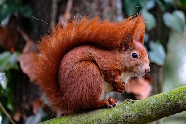 Das neugierige Eichhörnchen - Foto: Romana Thurz
