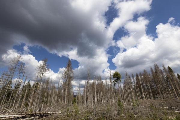 Sterbende Wälder - Foto: Holger Tobuschat