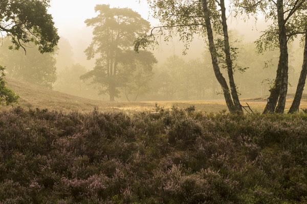 Fischbeker Heide - Foto: Dagmar Esfandiari