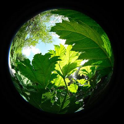 Meine Welt ist rund - Foto: Romana Thurz