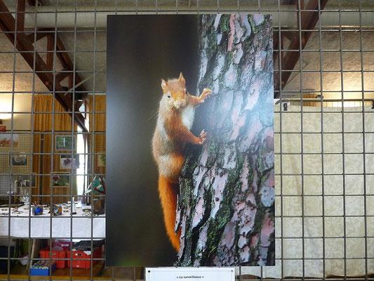 La série des écureuils proposée par Daniel Charrier
