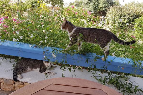 Balkonkatzen