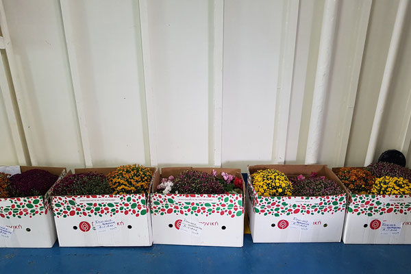 Blumen für Aigiali